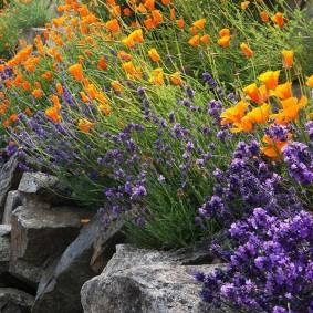 растения для альпийской горки фото вариантов