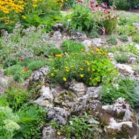 растения для альпийской горки идеи вариантов