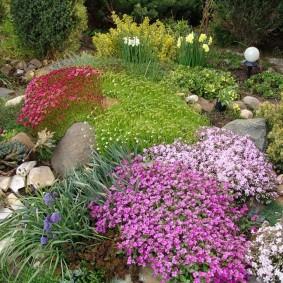 растения для альпийской горки виды