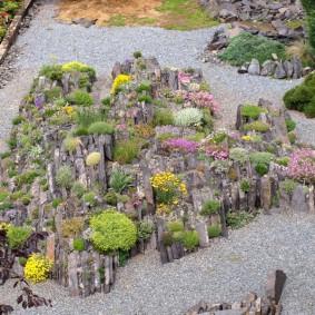 растения для альпийской горки виды фото