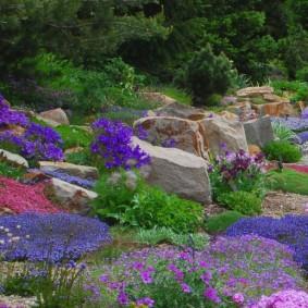 растения для альпийской горки фото видов