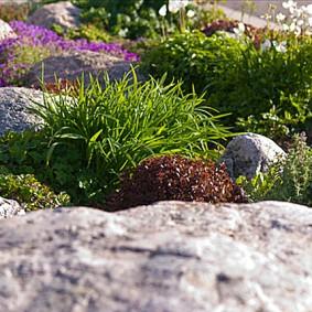 растения для альпийской горки обзор