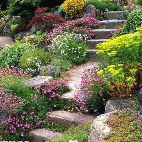 растения для альпийской горки виды оформления