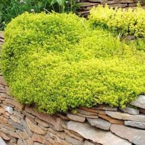 растения для альпийской горки декорирование