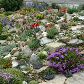 растения для альпийской горки фото дизайн