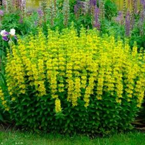 растения в ландшафтном дизайне виды фото