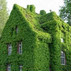 растения в ландшафтном дизайне идеи виды