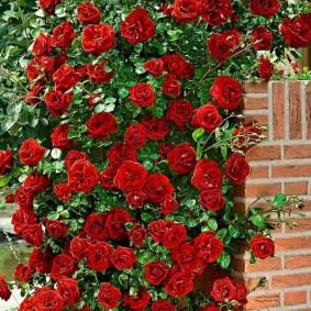 растения в ландшафтном дизайне розы
