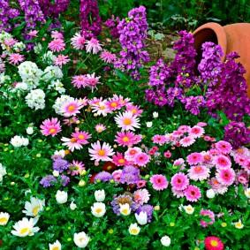 растения в ландшафтном дизайне обзор фото