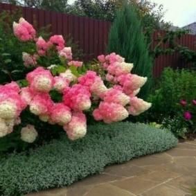 растения вдоль забора идеи декор