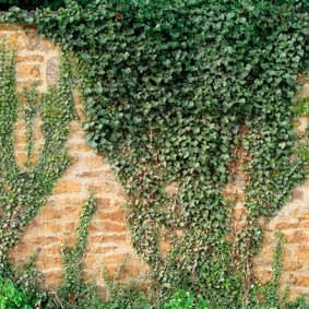 растения вдоль забора идеи варианты