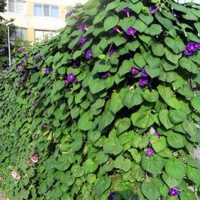 растения вдоль забора виды декора