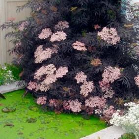 растения вдоль забора дизайн