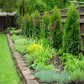 растения вдоль забора варианты декора