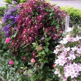 растения вдоль забора декор