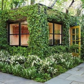 вертикальное озеленение участка идеи