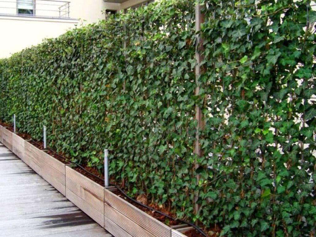 забор из сетки с изгородью