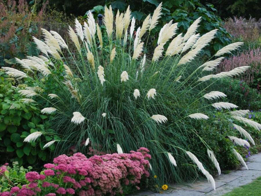 декоративная трава фото идеи