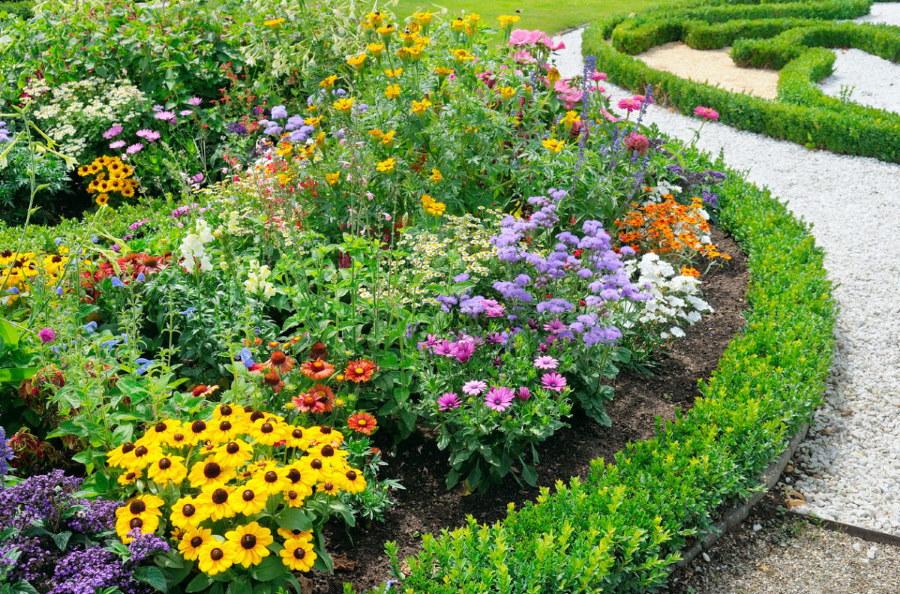 Многолетние цветы на клумбе около садовой дорожки