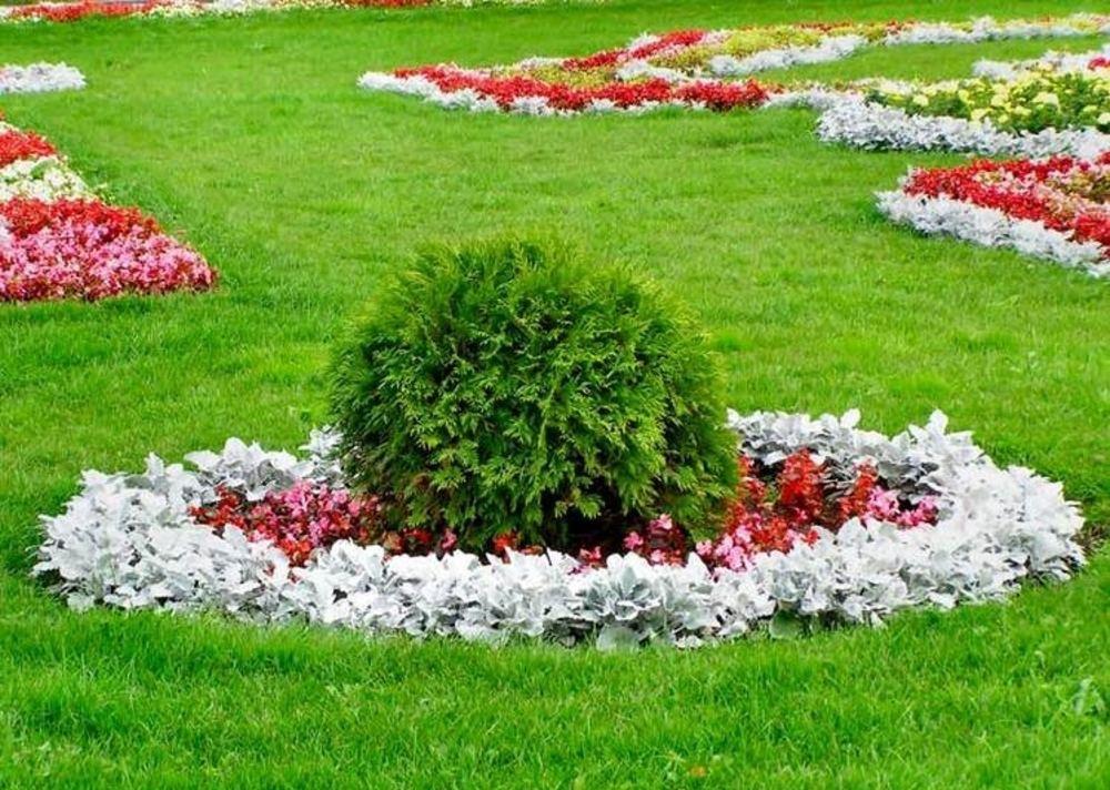 Шаровидная туя посередине цветочной клумбы