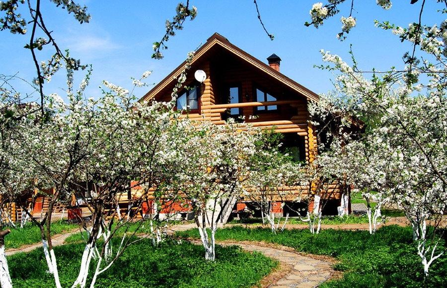 Цветущий сад на участке с деревянным домом