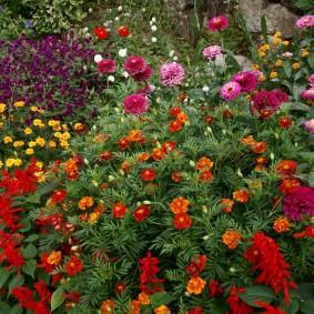 цветы цинии в саду дизайн