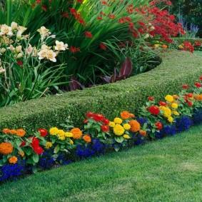цветы цинии в саду дизайн идеи