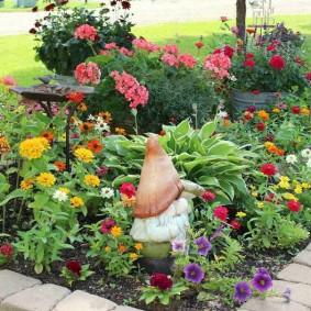 цветы цинии в саду на клумбе