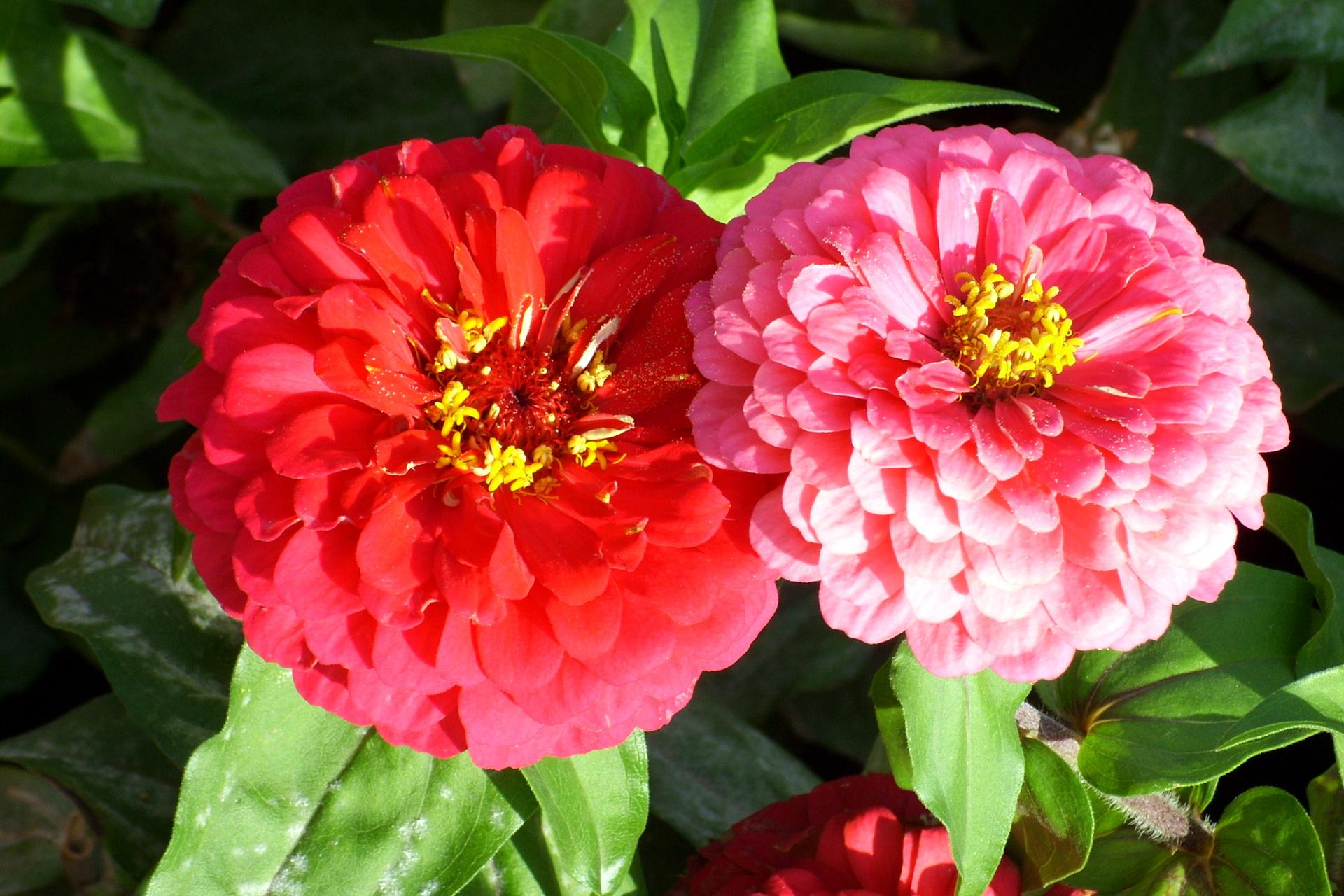Открытки красивые букеты цветов с пожеланиями тигр хотел