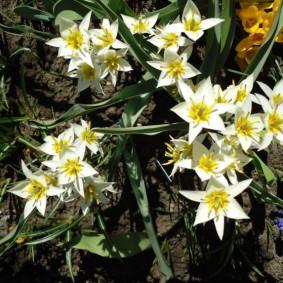 цветы для сада декор