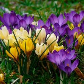 цветы для сада декор фото