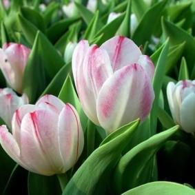 цветы для сада фото декор