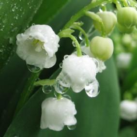 цветы для сада идеи декор