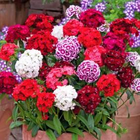 цветы для сада идеи декора