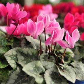 цветы для сада оформление фото