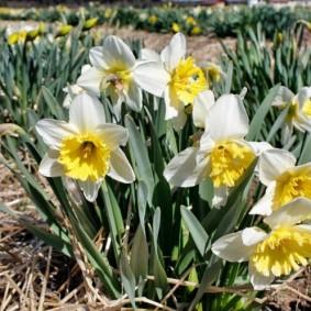 цветы для сада фото оформление