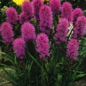цветы для сада фото оформления