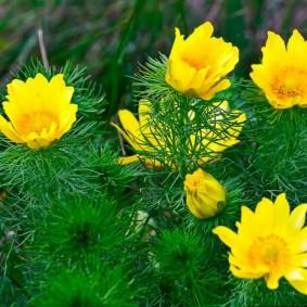 цветы для сада оформление идеи