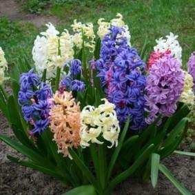 цветы для сада идеи оформление