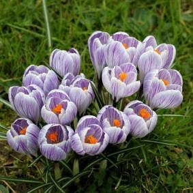 цветы для сада идеи оформления