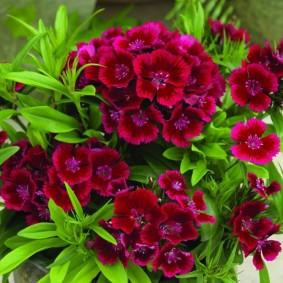цветы для сада варианты
