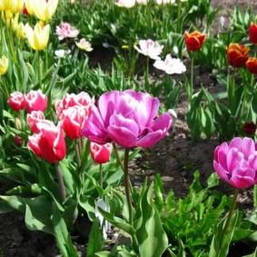 цветы для сада варианты фото