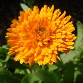 цветы для сада идеи