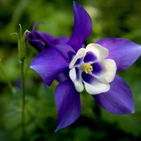 цветы для сада фото вариантов