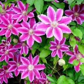 цветы для сада варианты оформления