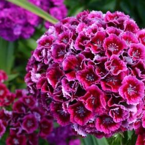 цветы для сада виды