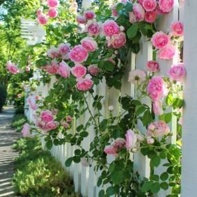 цветы для сада виды фото