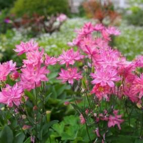 цветы для сада виды идеи