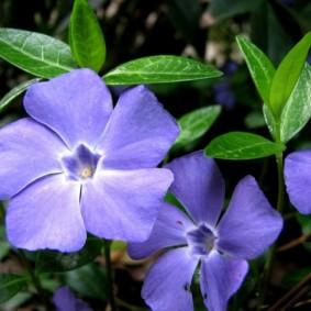 цветы для сада идеи виды