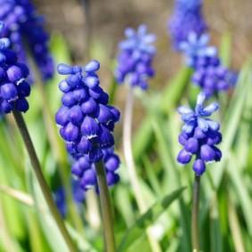 цветы для сада обзор